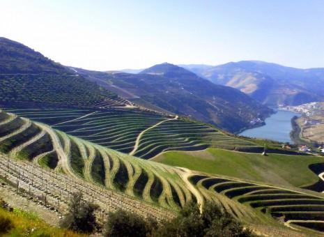 Oporto_terraced_vineyards